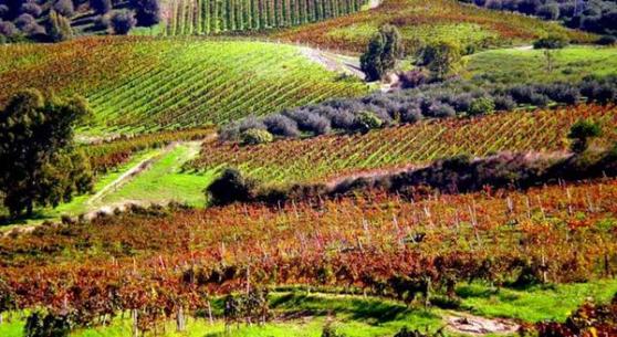 Calabria Du Cropio vineyards2