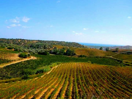 Calabria Du Cropio vineyards4