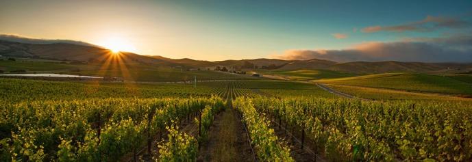 Grgich Hills vineyards
