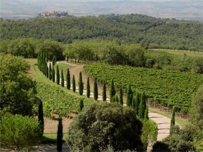 Poggio Antico view of Montalcino