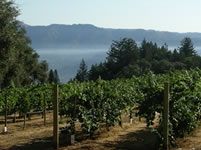Smith-Madrone vineyards via Mike Dunne