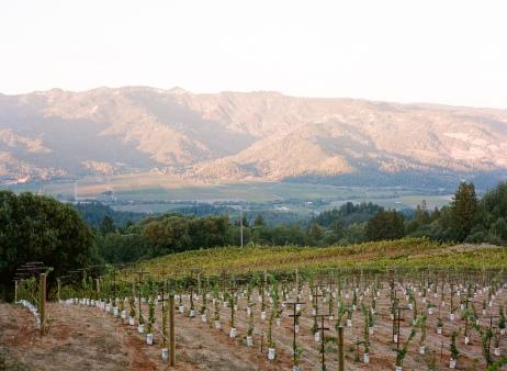 Smith Madrone vineyard via Meg Smith