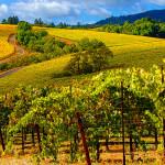 sonoma chat rrv vineyards2