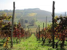 cantina del pino via vinolicious