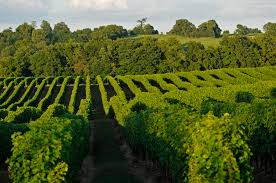 www.vins-cotes-gascone.fr