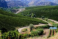 Vinkara vineyards2