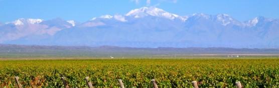 argento vineyards