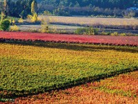 marques de casa concha vineyards