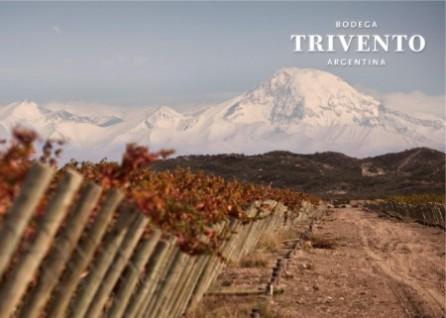 Trivento vineyards