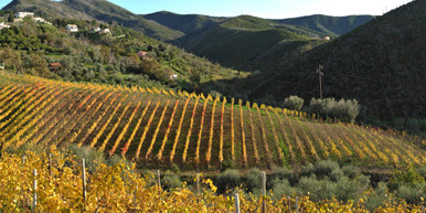 Bisson vineyards liguria