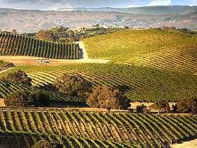 www.wine.com