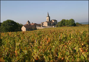 Cahors vineyards