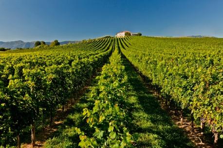 Massottina Winery