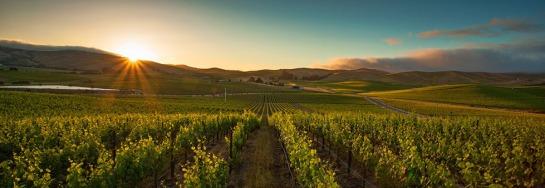 grgich-hills-vineyards