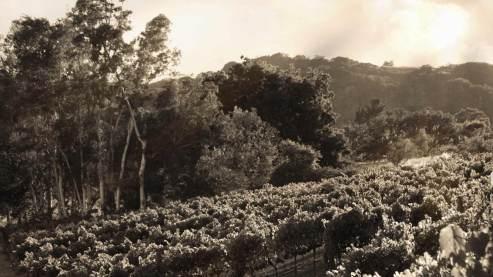 arrowbranch-vineyards