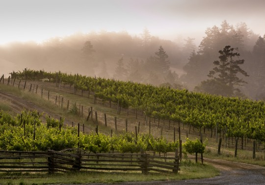 lazy-creek-vineyards
