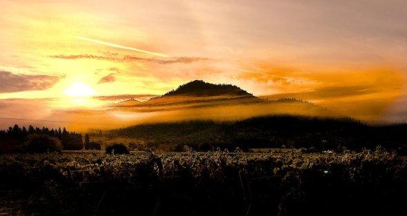 Apple Valley Oregon Harvest 2016 via Craig Camp http://winecampblog.com/journal/