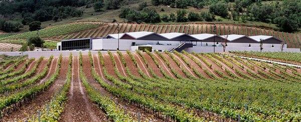 cepa-21-winery-ribera-del-duero