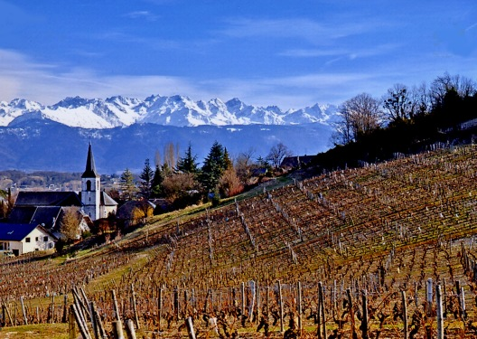 Savoie Vineyards via www.guildsomm.org courtesy of Beatrice Bernard