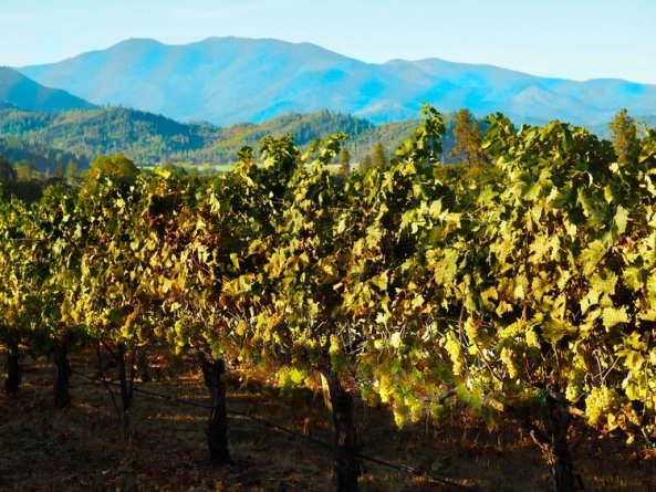 Troon Vineyard Estate Vermentino Framed by the Siskiyou Mountains via Craig Camp http://winecampblog.com/journal/