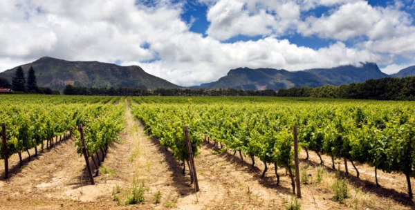 Exploring wines of south africa rockin red blog for Jardin wine south africa