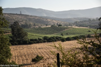 Matetic's Biodynamic Vineyard in San Antonio Valley