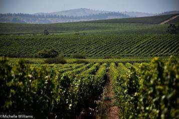Undurraga's Leyda Valley Vineyard