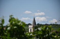pfalz church and vineyards