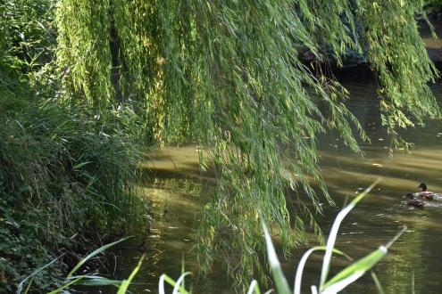 Pfalz duck pond